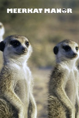Meerkat Manor: The Next Generation