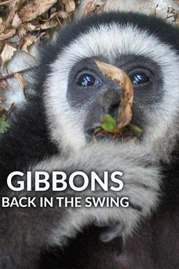 Gibbons: Back in the Swing