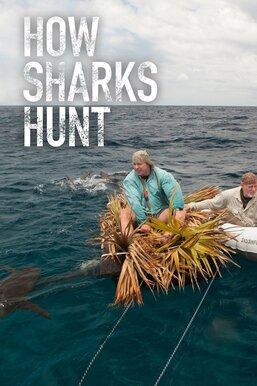 How Sharks Hunt