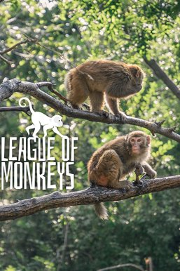 League of Monkeys