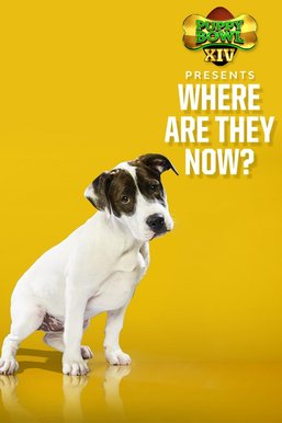 Puppy Bowl XIV Presents: Where Are They Now?