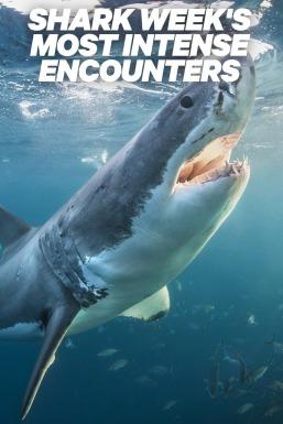 Shark Week's Most Intense Encounters
