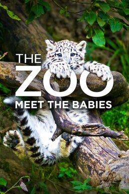 The Zoo: Meet the Babies