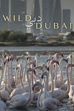Wild Dubai
