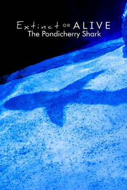 Extinct or Alive: The Pondicherry Shark