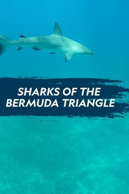 Sharks of the Bermuda Triangle