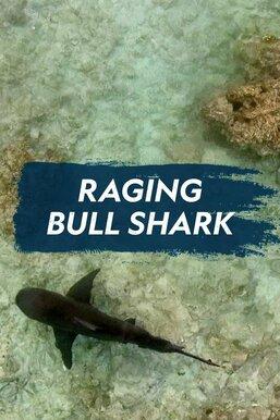 Raging Bull Shark