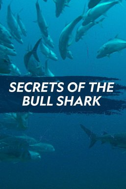 Secrets of the Bull Shark