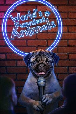 World's Funniest Animals