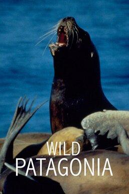 Wild Patagonia