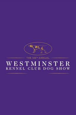 145th Westminster Kennel Club Dog Show