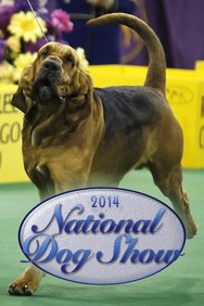 2014 National Dog Show