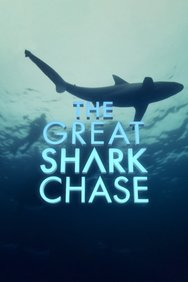 The Great Shark Chase