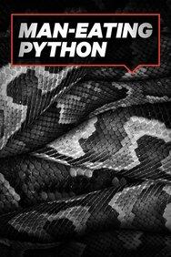 Man Eating Python of Sulawesi