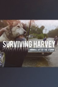 Surviving Harvey: Animals After the Storm