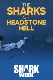 The Sharks of Headstone Hell