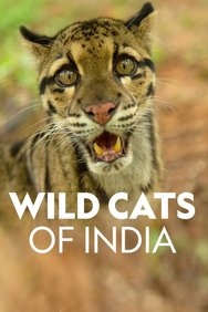Wild Cats of India: Masters of Disguise