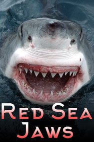 Red Sea Jaws